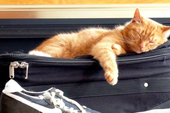 Check our packing guide for  tips on how to pack for your destination. And no, we do not recommend that you pack your cat.